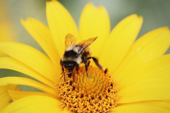 summer-yellow-flower-bee