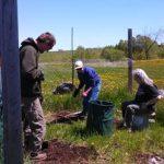 Catlin digging 2