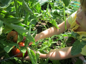 Gril with tomato-Catlin garden