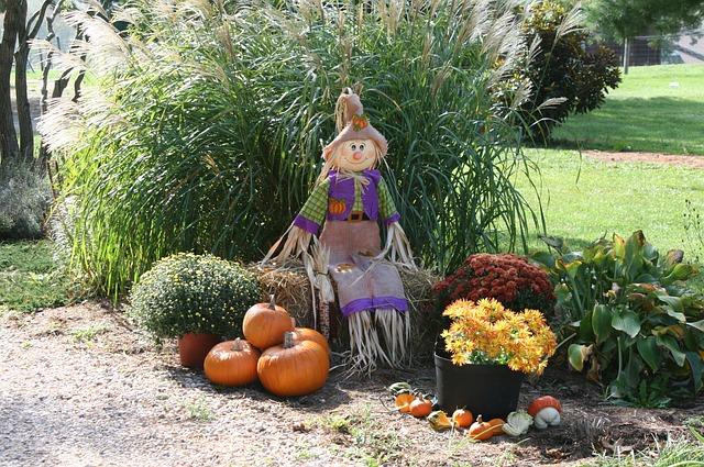 pumpkin-991825_640